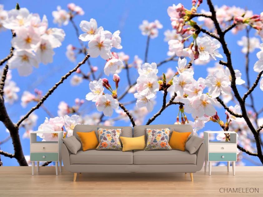 Фотообои Расцвели абрикосы весной - 1