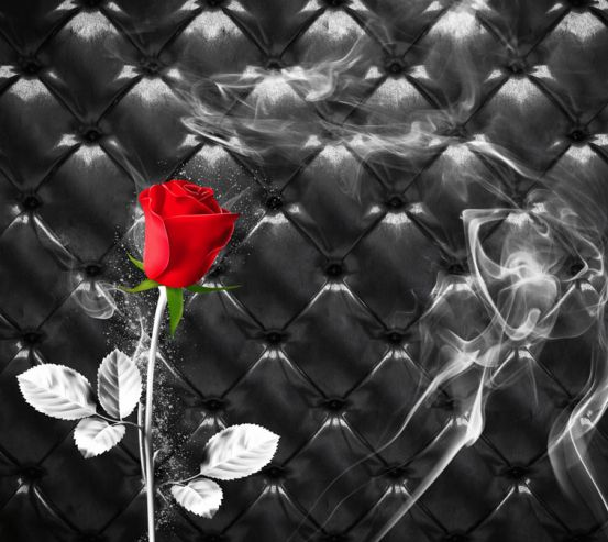 Фотообои Красная роза на фоне 24188