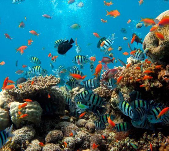 Фотообои Рыбки в коралловых рифах 0511