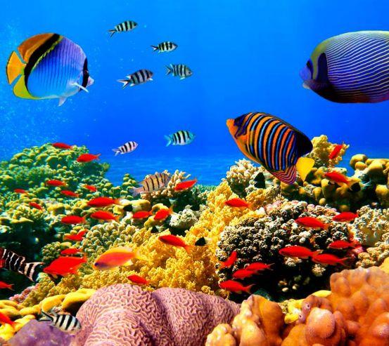 Фотообои Рыбки на дне морском 3052