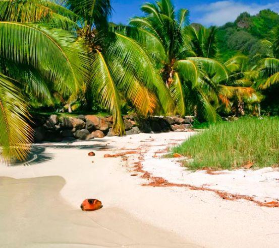 Фотообои Кокосы на пляже 9882