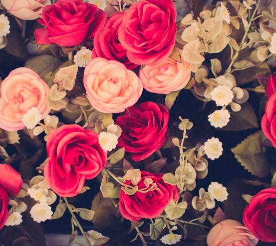 Фотообои Розы 13363