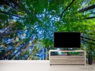 Фотообои деревья для потолка - 2