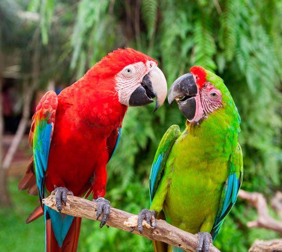 Фотообои Общение попугаев 13376