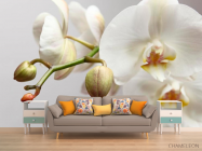 Фотообои Орхидея белоснежная - 1