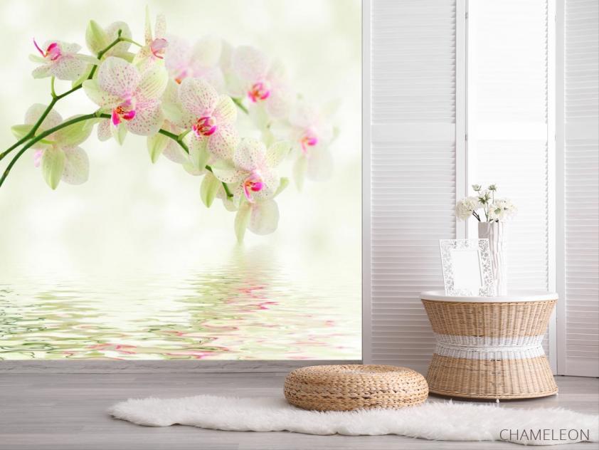 Фотообои Орхидеи над водой - 2