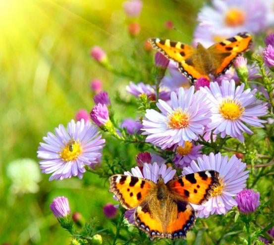 Фотообои Бабочки в цветах 0877