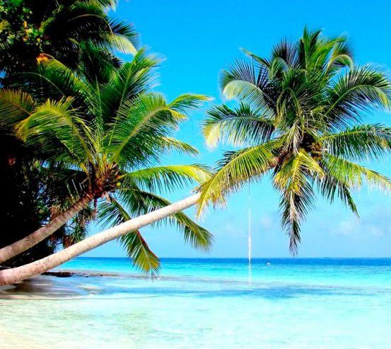 Фотообои Пальмы и море 11920