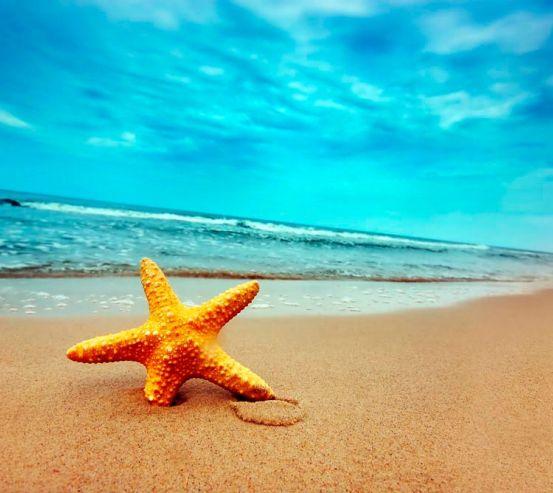 Фотообои Пляж, морская звезда 0515