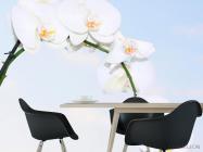Фотообои Ветка белоснежных орхидей - 1