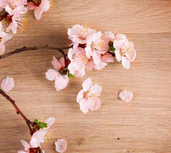 Фотообои Вишневые цветы на полировке 5226