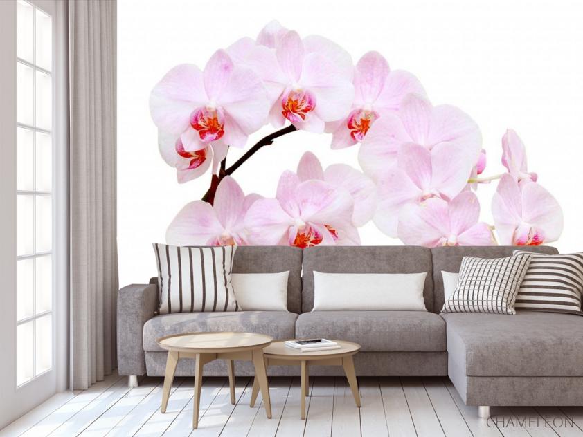 Фотообои Белоснежные цветы орхидеи - 3