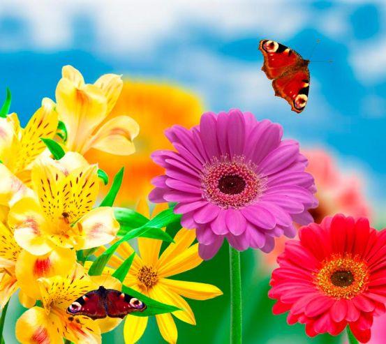 Фотообои Герберы и бабочки 6396