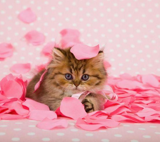 Фотообои котёнок в лепестках роз 20677