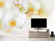 Фотообои Орхидеи белые с желтым - 2