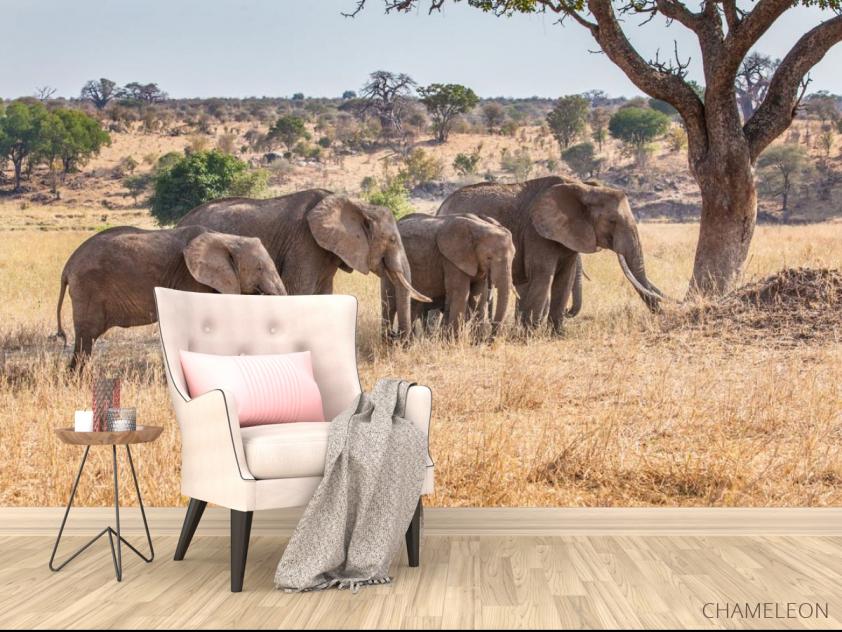 Фотообои слоны и слонята - 4