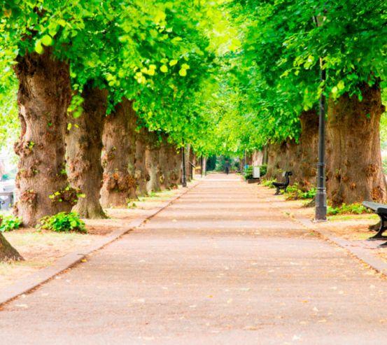 Фотообои Тоннель из деревьев 19943