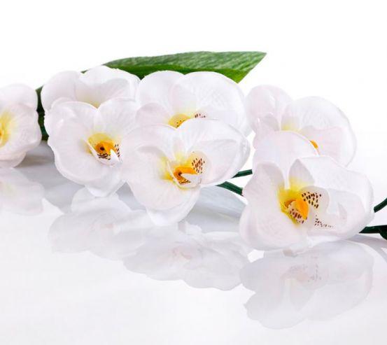 Фотообои Орхидея 19416