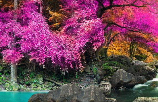 Фотообои Розовый лес