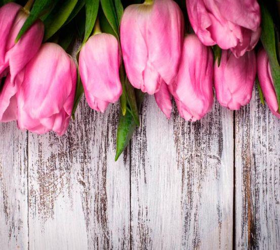 Фотообои Тюльпаны 13036
