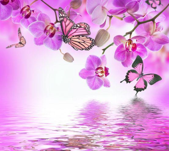 Фотообои орхидеи с бабочками над водой 20745