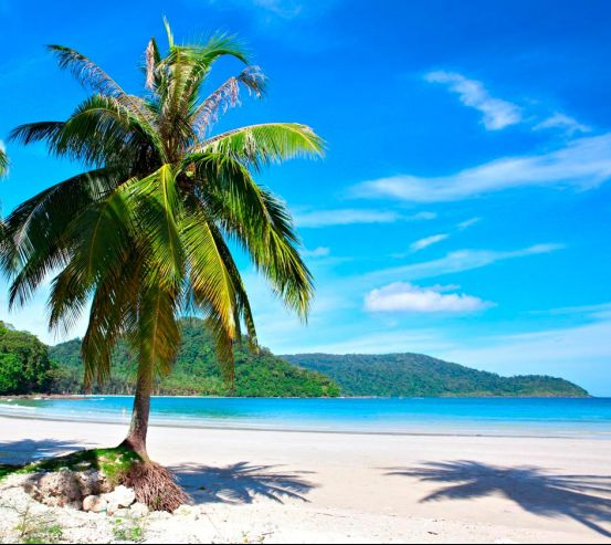 Фотообои Пальма на пляже 9318