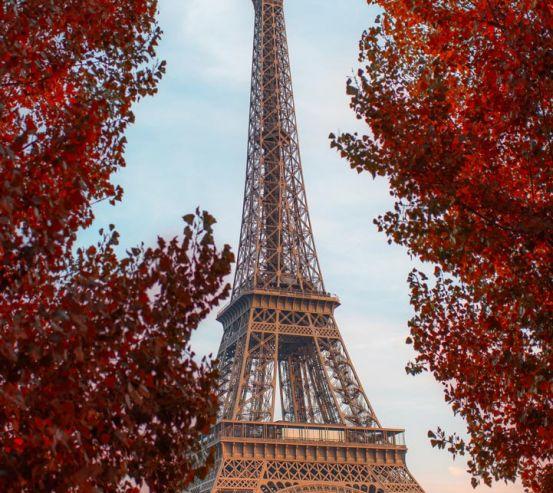 Фотообои красные деревья в Париже 21010