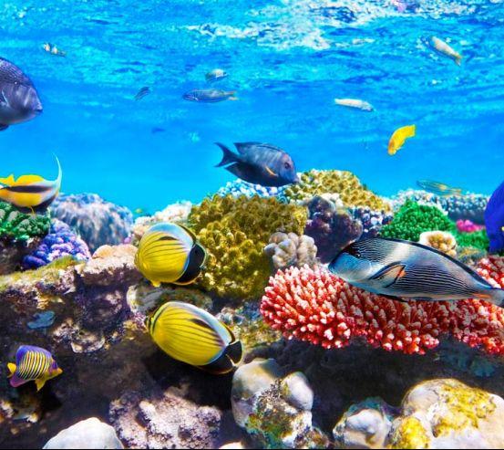Фотообои Рыбы 11776