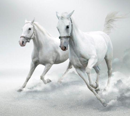 Фотообои Две белых лошади 1375
