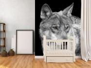 Фотообои белый волк - 2