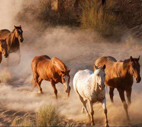 Фотообои Табун лошадей 0447