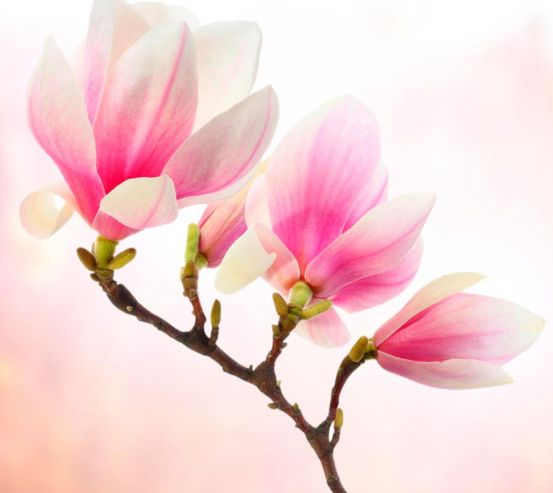 Фотообои Бледно-розовый кипарис 5740