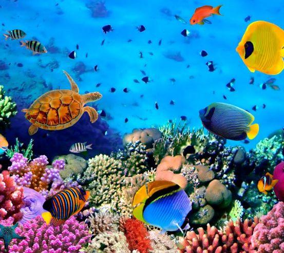 Фотообои Черепахи и риф 8574