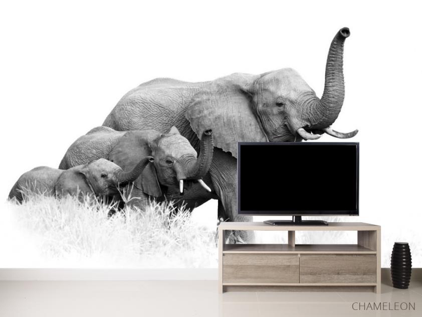 Фотообои семья слонов - 2