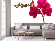 Фотообои Ветка бардовых орхидей - 3