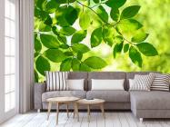 Фотообои зеленые листья на дереве - 3