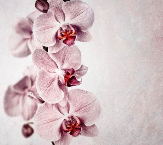 Фотообои Серенькие орхидеи 12671