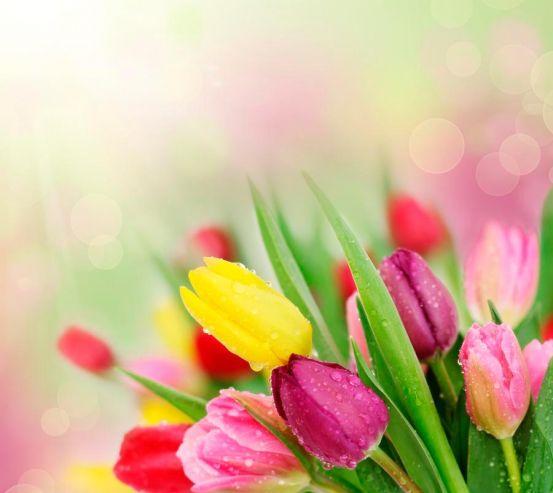 Фотообои Тюльпаны разных цветов 1320