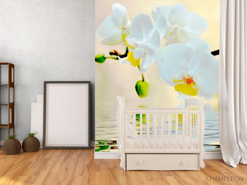 Фотообои Белоснежные орхидеи в воде - 2