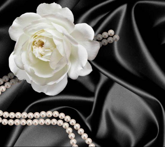 Фотообои Роза с жемчугом 18198