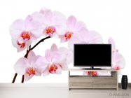 Фотообои Белоснежные цветы орхидеи - 2