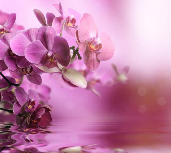Фотообои розовые орхидеи над водой 20496