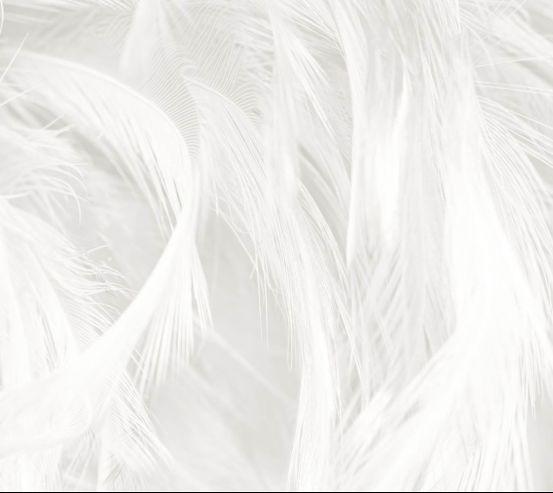 Фотошпалери Пір'я білі 27676