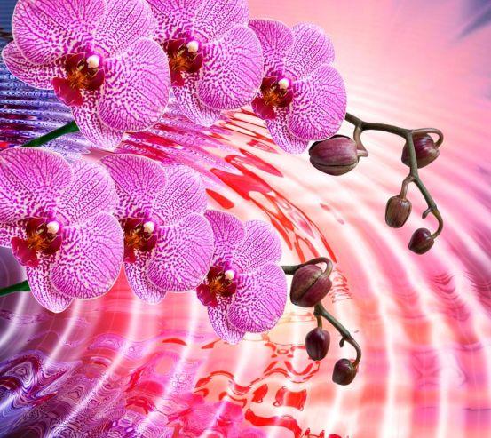 Фотообои Сиреневые распустившиеся орхидеи 4574