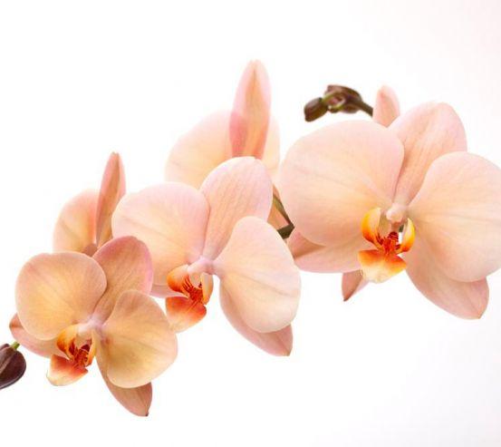 Фотообои Веточка орхидей 5909
