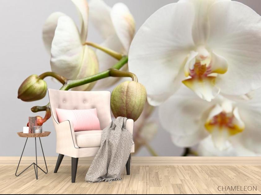 Фотообои Орхидея белоснежная - 4