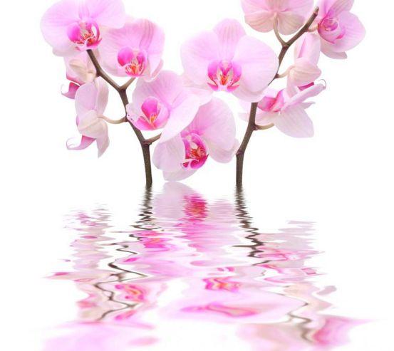 Фотообои Орхидеи бело-розовые 8322