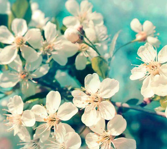 Фотообои Цветы вишневые в вазе 3897