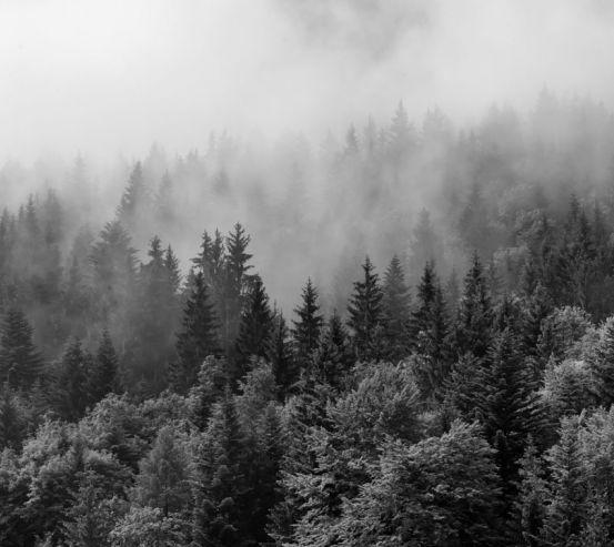 Фотообои лес 20922-h