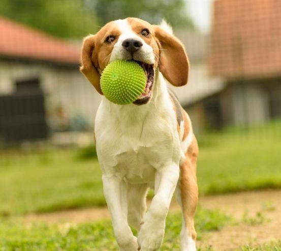 Фотообои собака с мячиком 21590